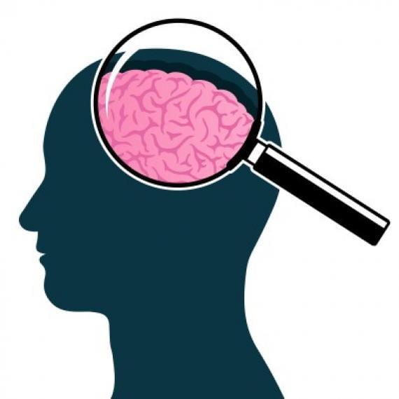 brain_study