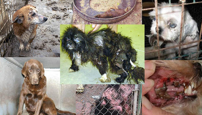 U.S. Needs to Abolish Inhumane Puppy Mills - The Ring of Fire Network