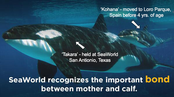 SeaWorld separates moms and calves