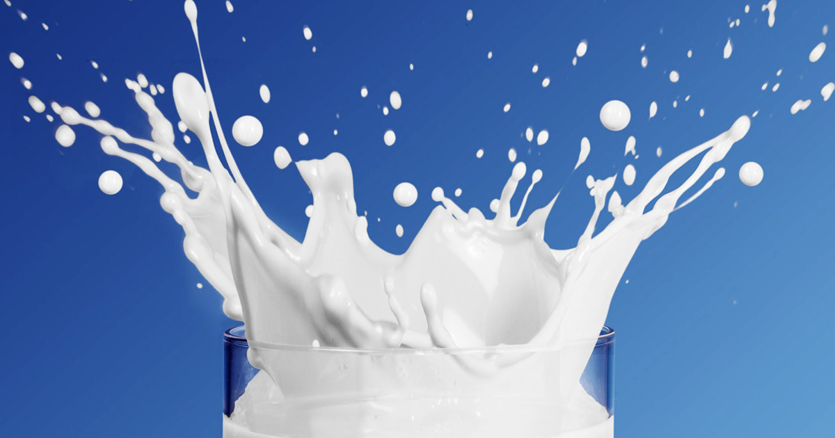 should humans drink milk By jessica migala for many of us, cow's milk is the first thing we remember drinking, and we've always been told it's a healthy choice: it's packed with calcium and fortified with vitamin.