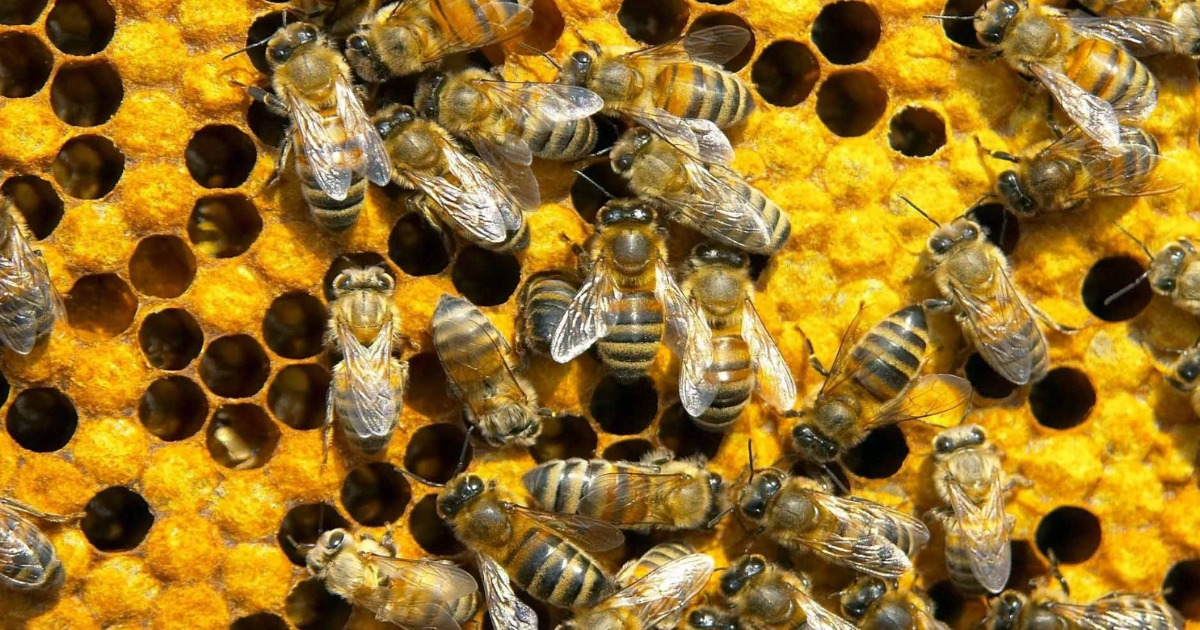 Mosquito spraying kills millions of SC honeybees
