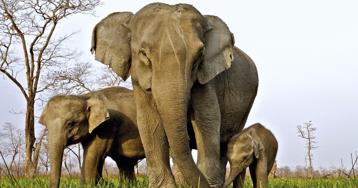 Adaptation Fights Back Countering Ivory Poachers