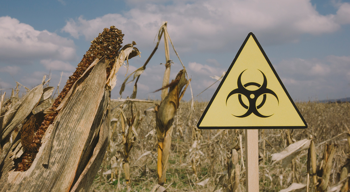 Is It Gluten Or Glyphosate? 5-Year-Old Research Says It's The Latter - The Ring of Fire Network